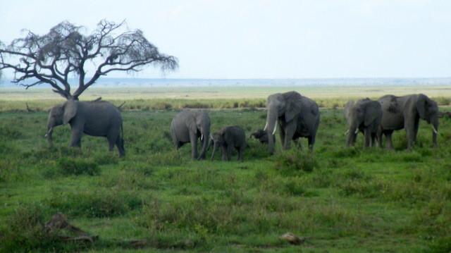 amboseli-in2kenya-safari-watamu-kenya-elefanti-kilimajaro