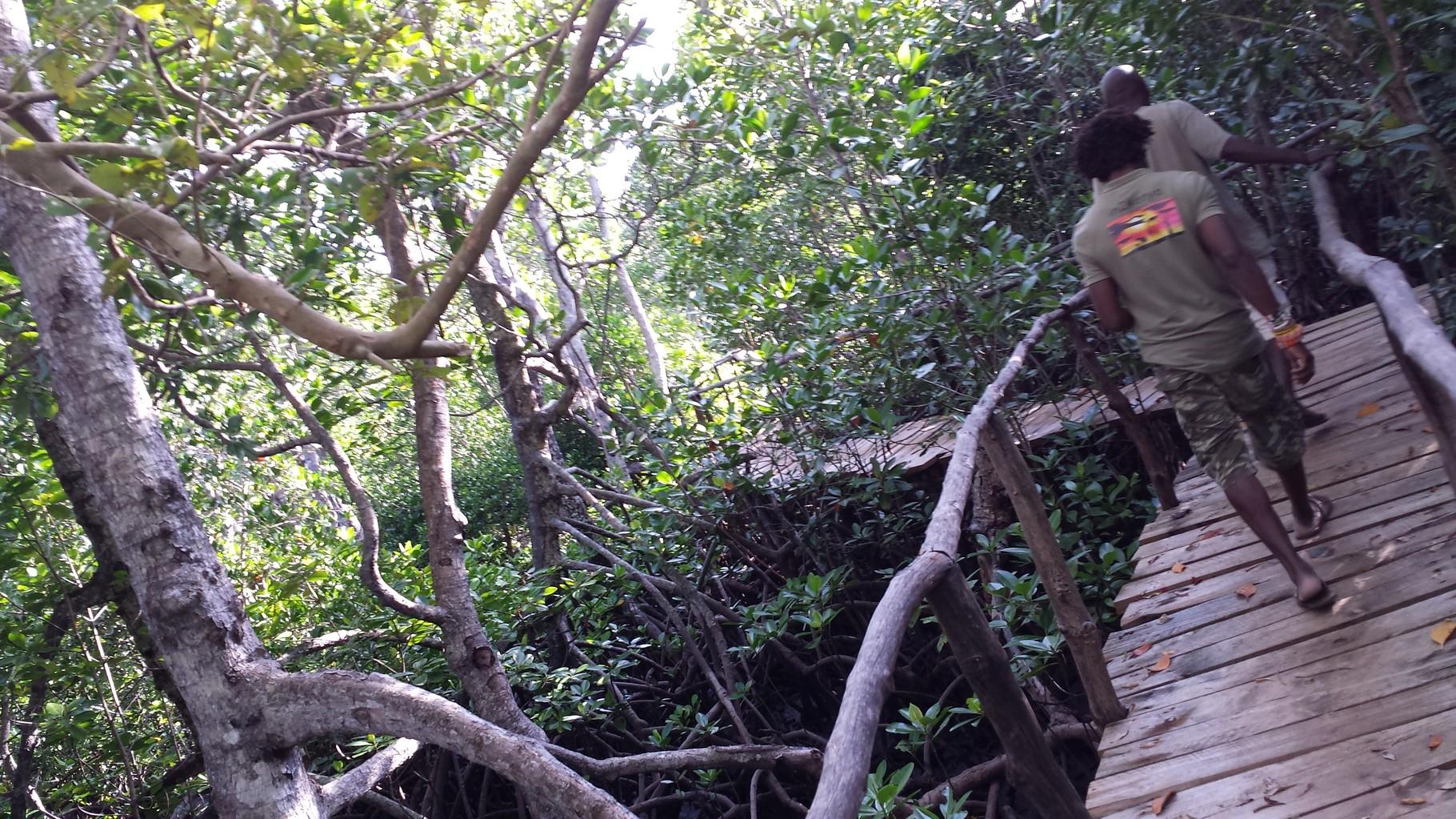 Radici di mangrovie Mida Creek Watamu