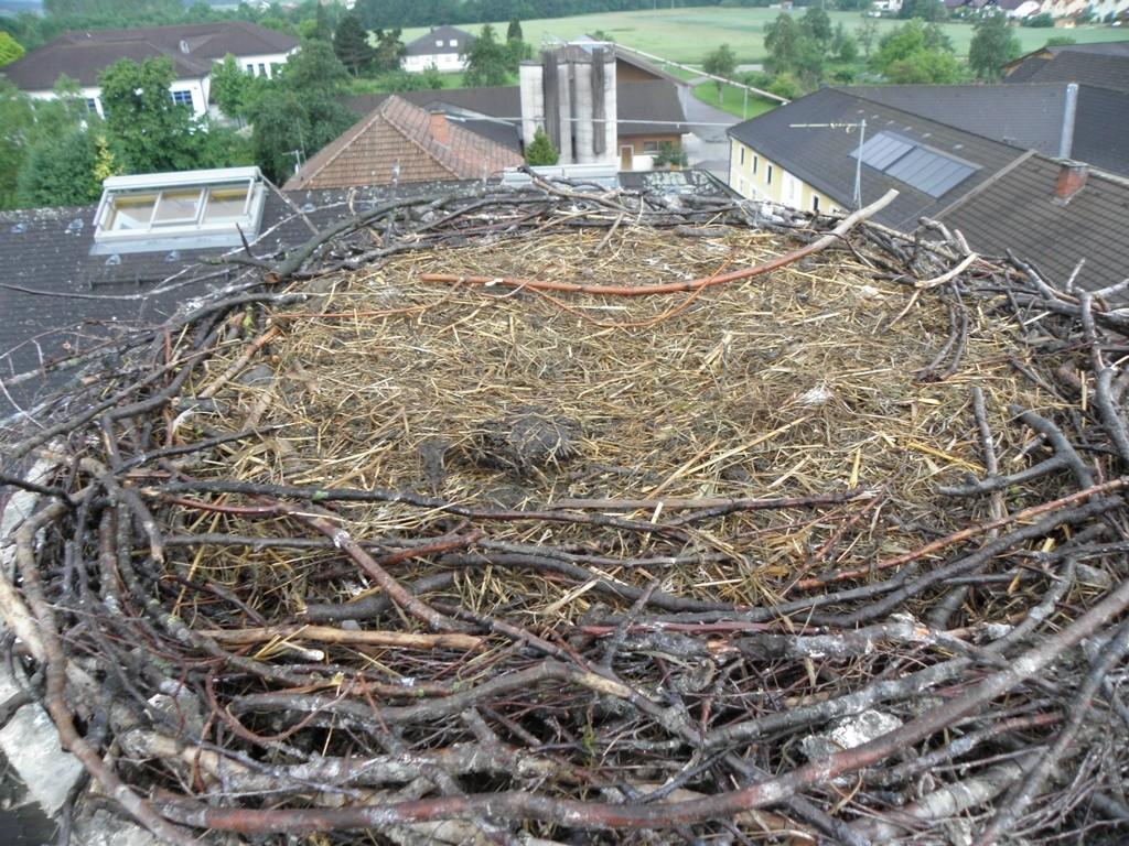ausgeräumtes Nest                                                       Foto: Robert Gattringer