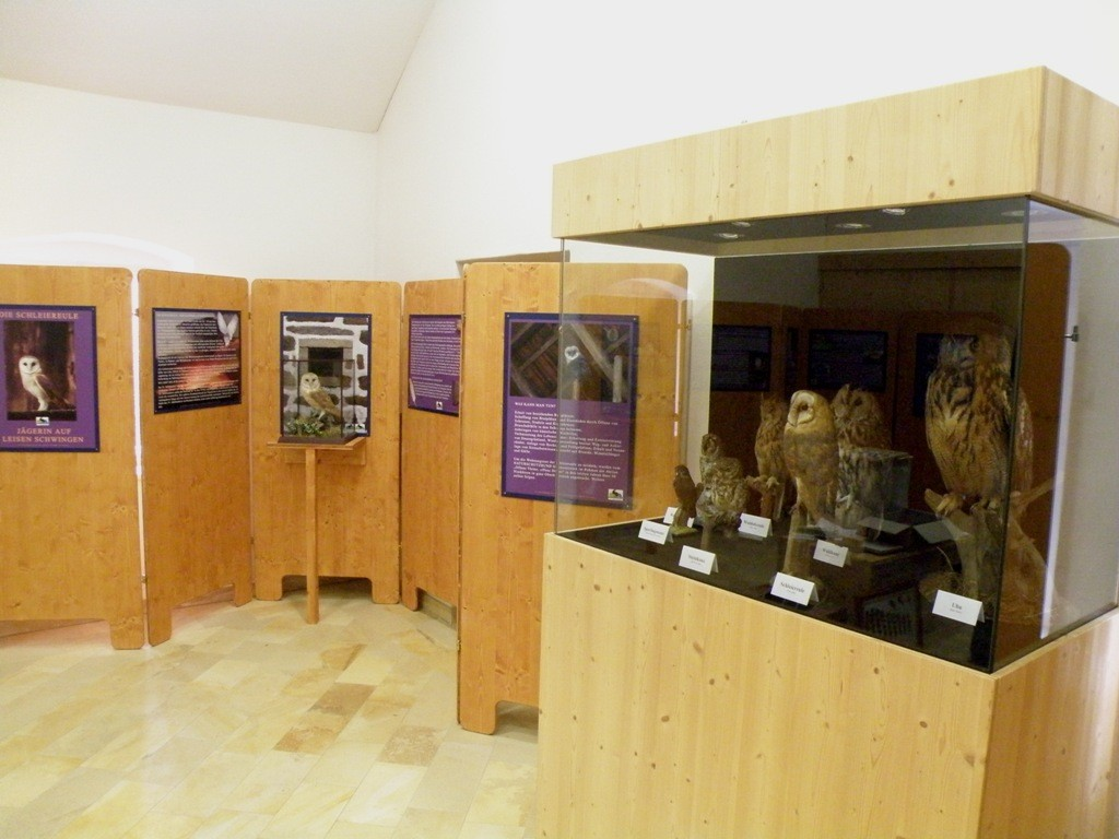 Eulen und Fledermausausstellung 2008