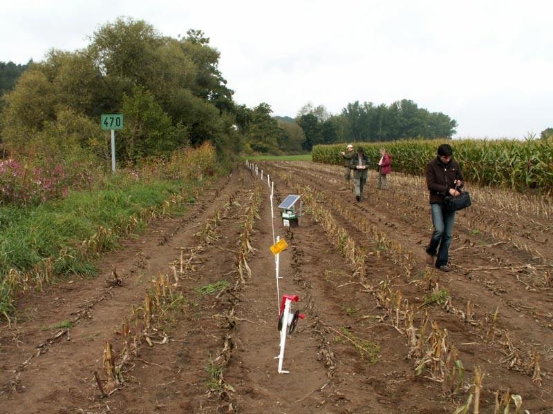 Elektrozaun schützt Maisfeld