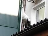 Der Jungvogel auf dem Vordach