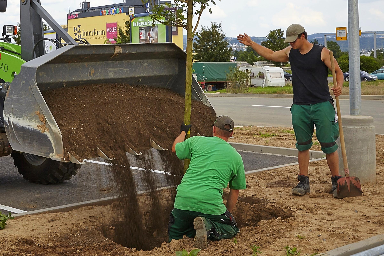 Baumsubstrate interground - Baum