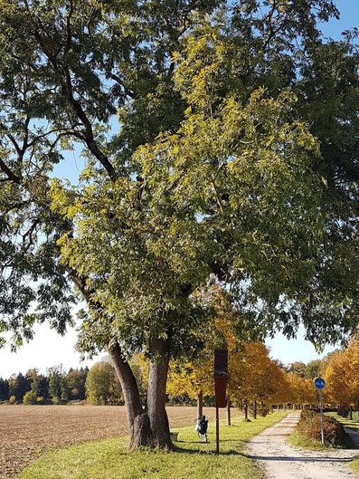 Baumsubstrate interground-Baum