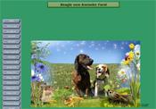 beagle-vom-ammeler-forst.ch