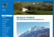 www.stalderbeagle.ch