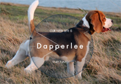 www.dapperleebeagles.com