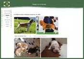 www.grischa-beagle.ch