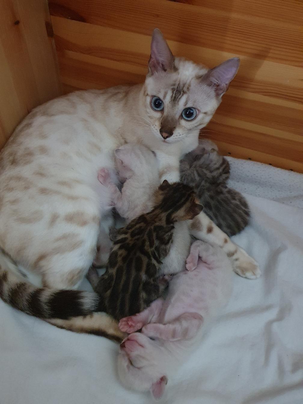 Ashari mit ihren 3 Herzbuben