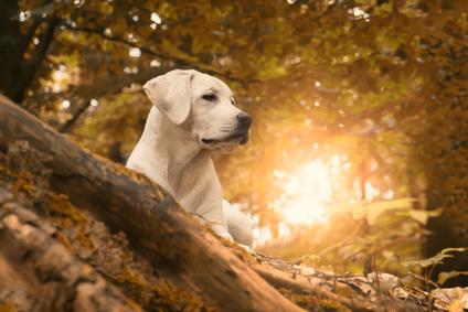 Hundehalterhaftpflicht Onlinevergleich Nadine Rusch Versicherungsmaklerin Märkische Heide / Unterspreewald / Lübben / Spreewald