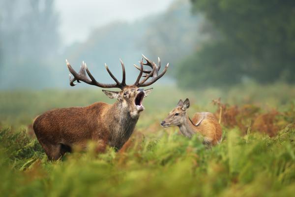 turismo activo ecoturismo altiplano granada berrea ciervo