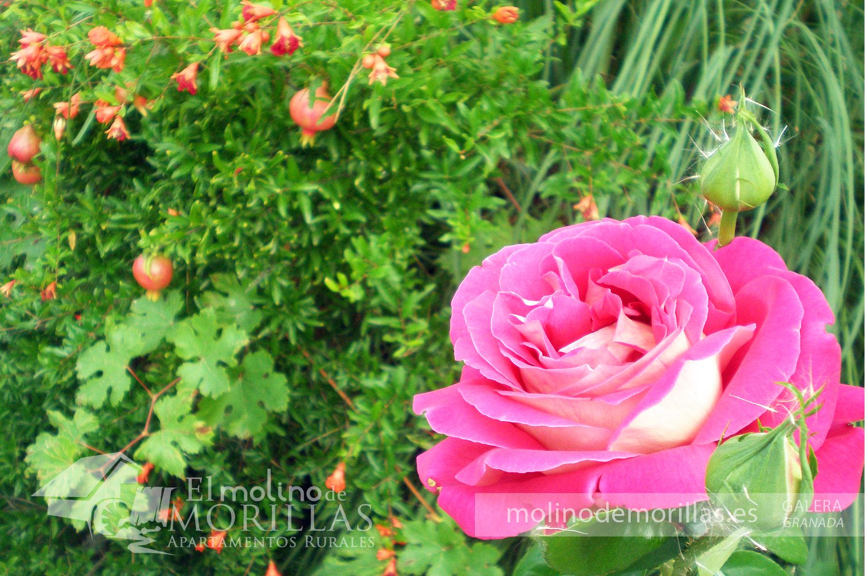 Rosales y rincones con flores autóctonas
