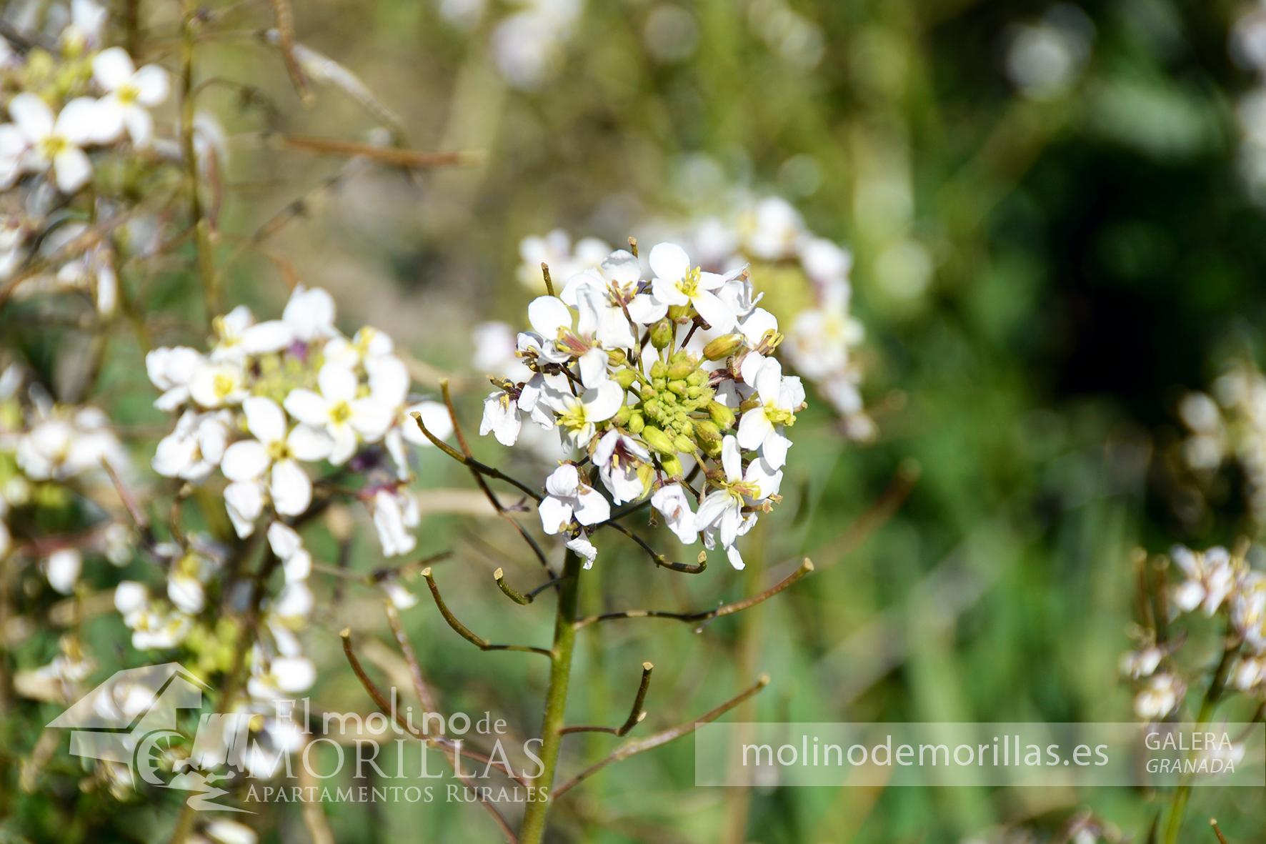 Flora autóctona en el entorno