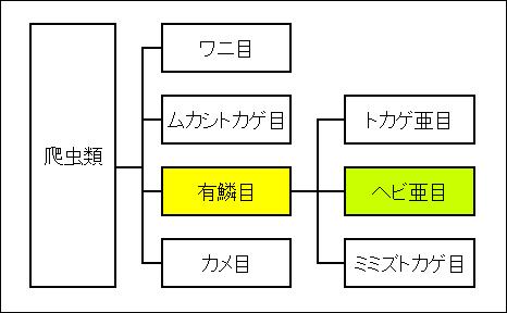 爬虫類の分類表