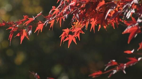 2008.11 鶴見緑地