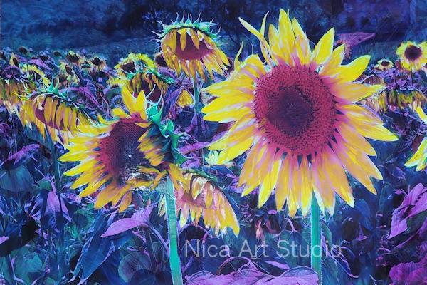 Sonnenblumen, 2018, 20 x 20 cm, Fotografie mit Ölfarbe