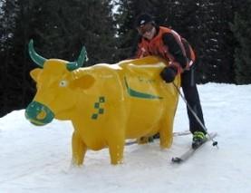 klitschi rockt die gelbe kuh...