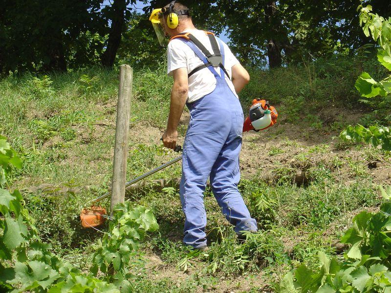 Mäharbeiten - wenn  der Wein so wächst wie das Gras ............