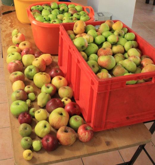 Äpfel aus der Groitzscher Region