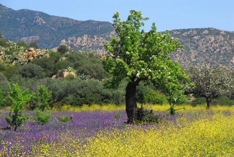 Sardinian flower landscape