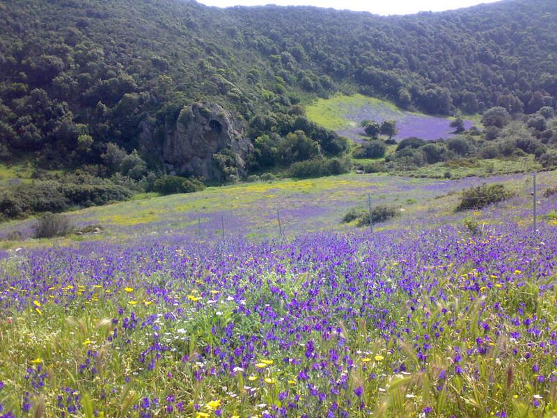 Springtime colours in Costa Verde (Sardinian West coast)