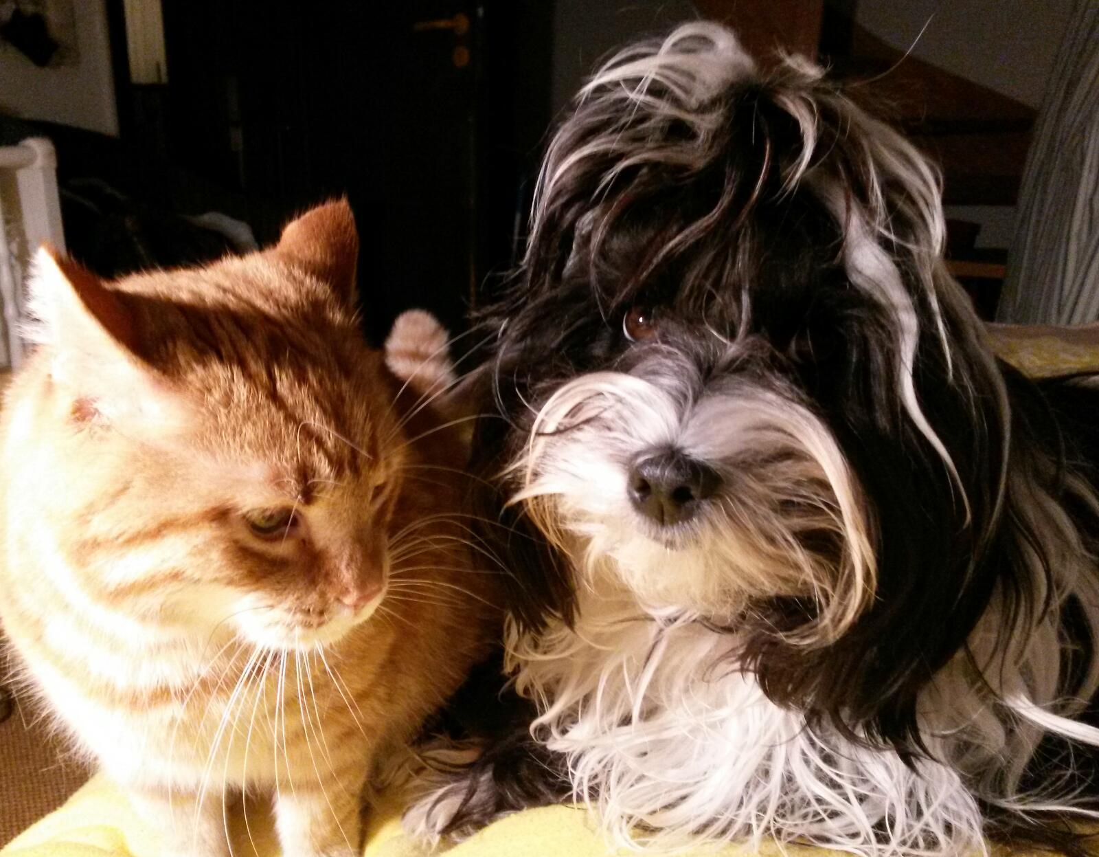 Amithaba und Leo....eine tolle Freundschaft =)