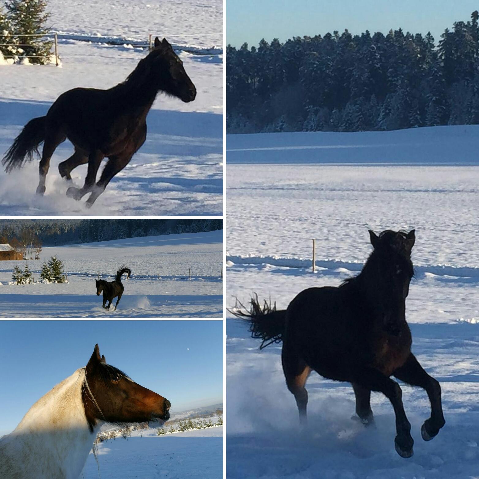 die Zwei haben auch ihren Spaß im Schnee