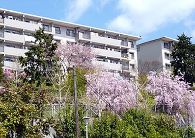 山麓線から見た箕面如意谷住宅 ~ 春はしだれ桜が美しい。