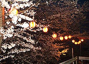 夜桜・・毎年「さくらまつり」が開かれる