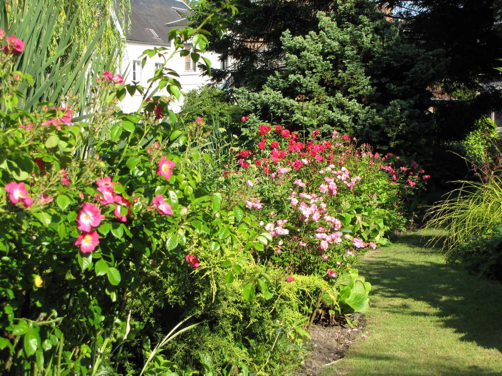 En juin, le mois des roses