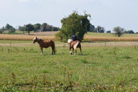 Rémi pour la première fois sur le dos d'un cheval