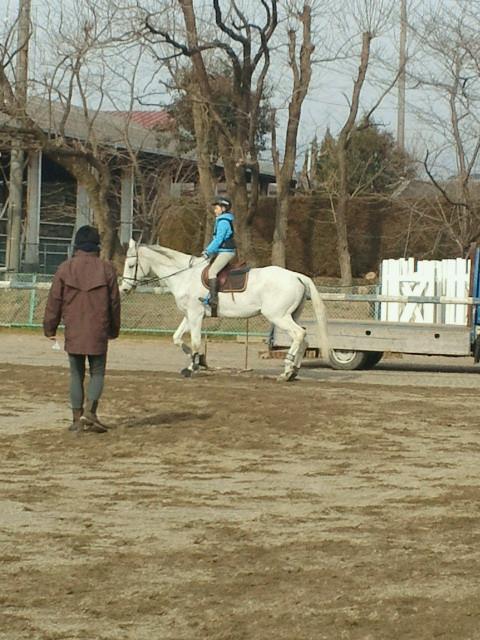 正覇君、障害の前の馬場トレーニング