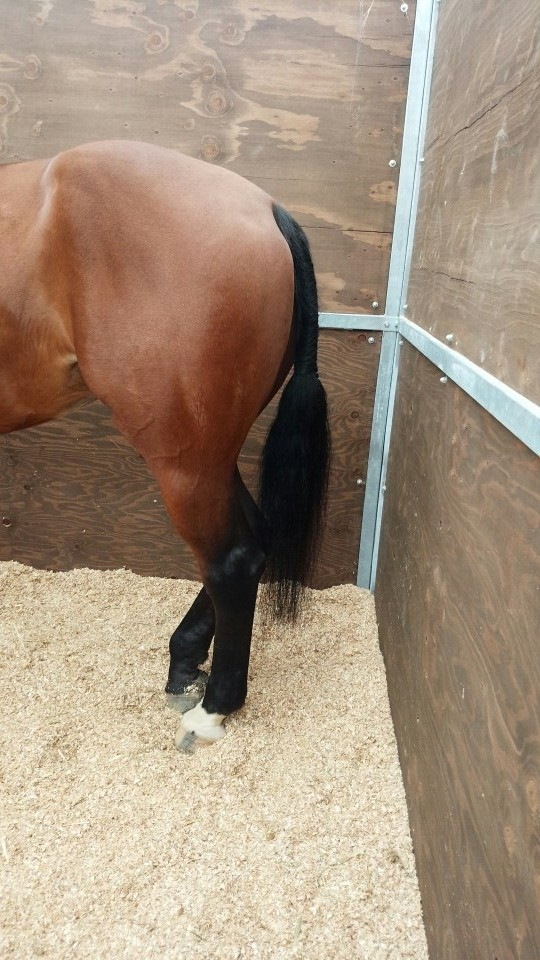 その日の午後は馬場。岐阜のユリちゃんの力作の尻尾♪