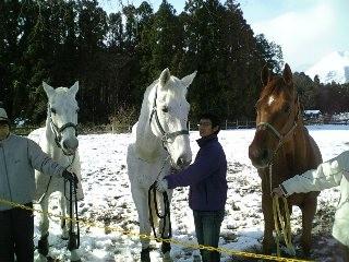 うちの懐かしの看板馬3頭。左からドル、プレ、カイト♡