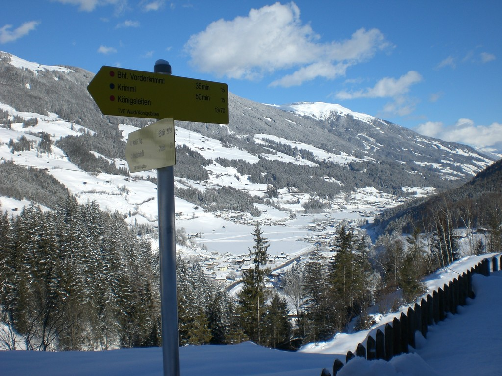 Blick vom Falkenstein - Richtung Wald im Pinzgau