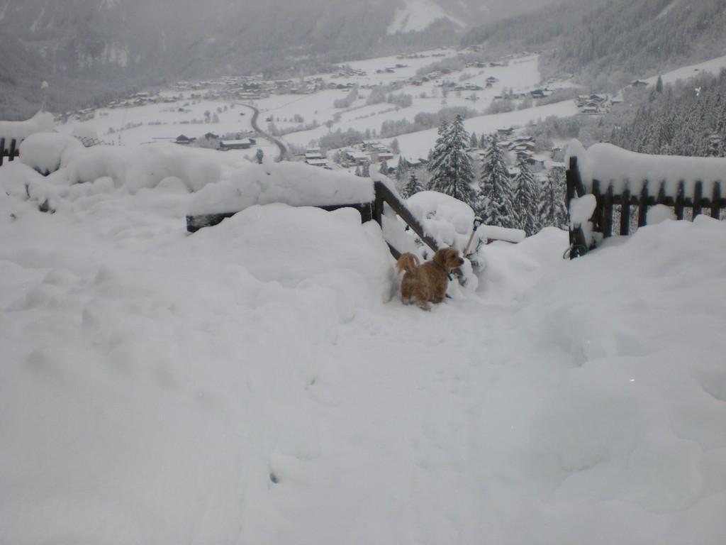 eingeschneiter Hund