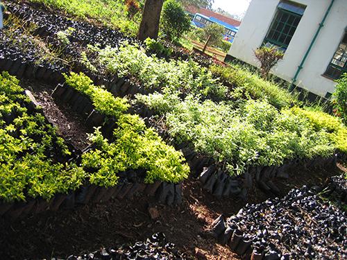 Nurseries to grow seedlings by children
