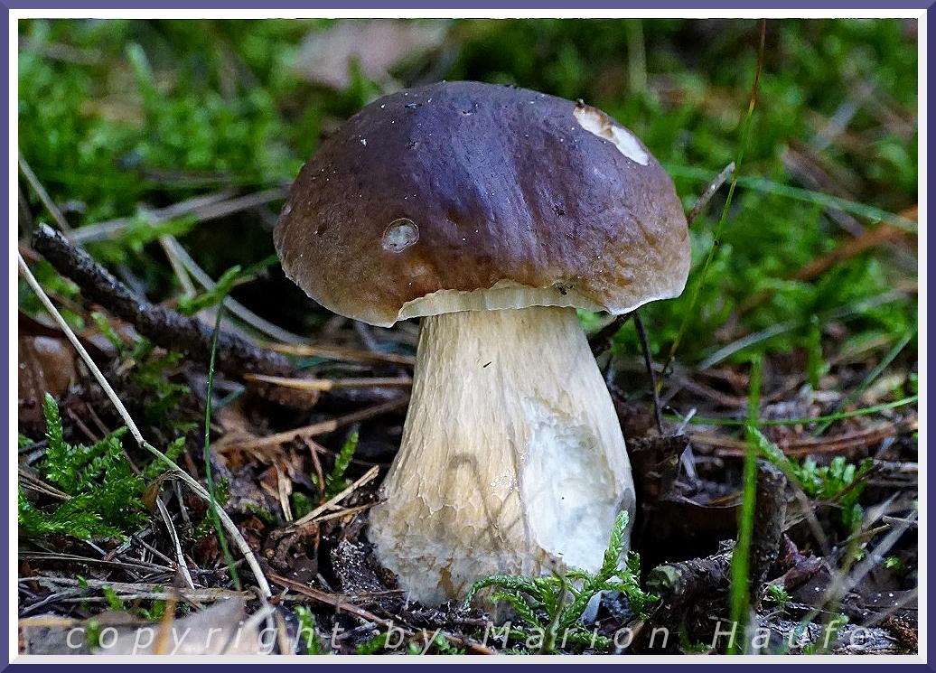 Pilze auf dem Darß