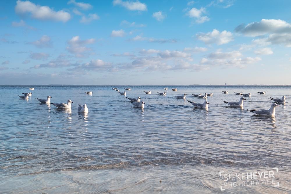 ruhige Möwenszene auf glatter See
