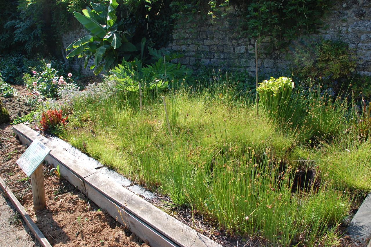 Le jardin exp rimental 2 rue balzac alencon site de la sho for Le jardin 21 rue de la federation