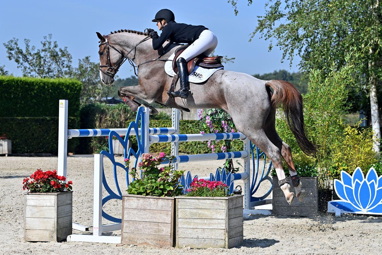 SLF Horse Auctions: Paarden om aan de hele wereld te laten zien