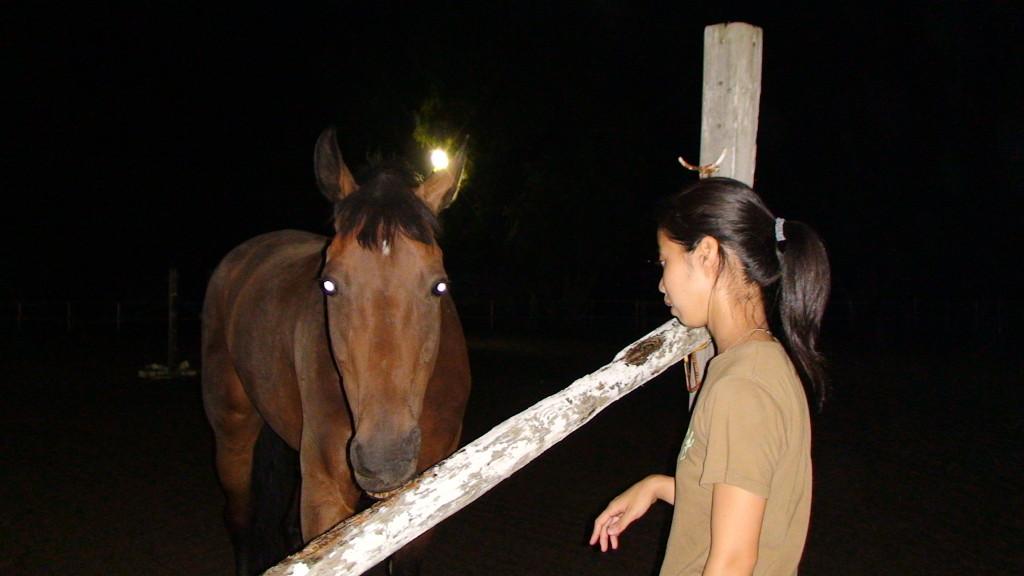 2006年 夜の放牧 シェイエン