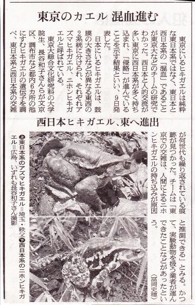 西日本系と東日本系混血ヒキガエル