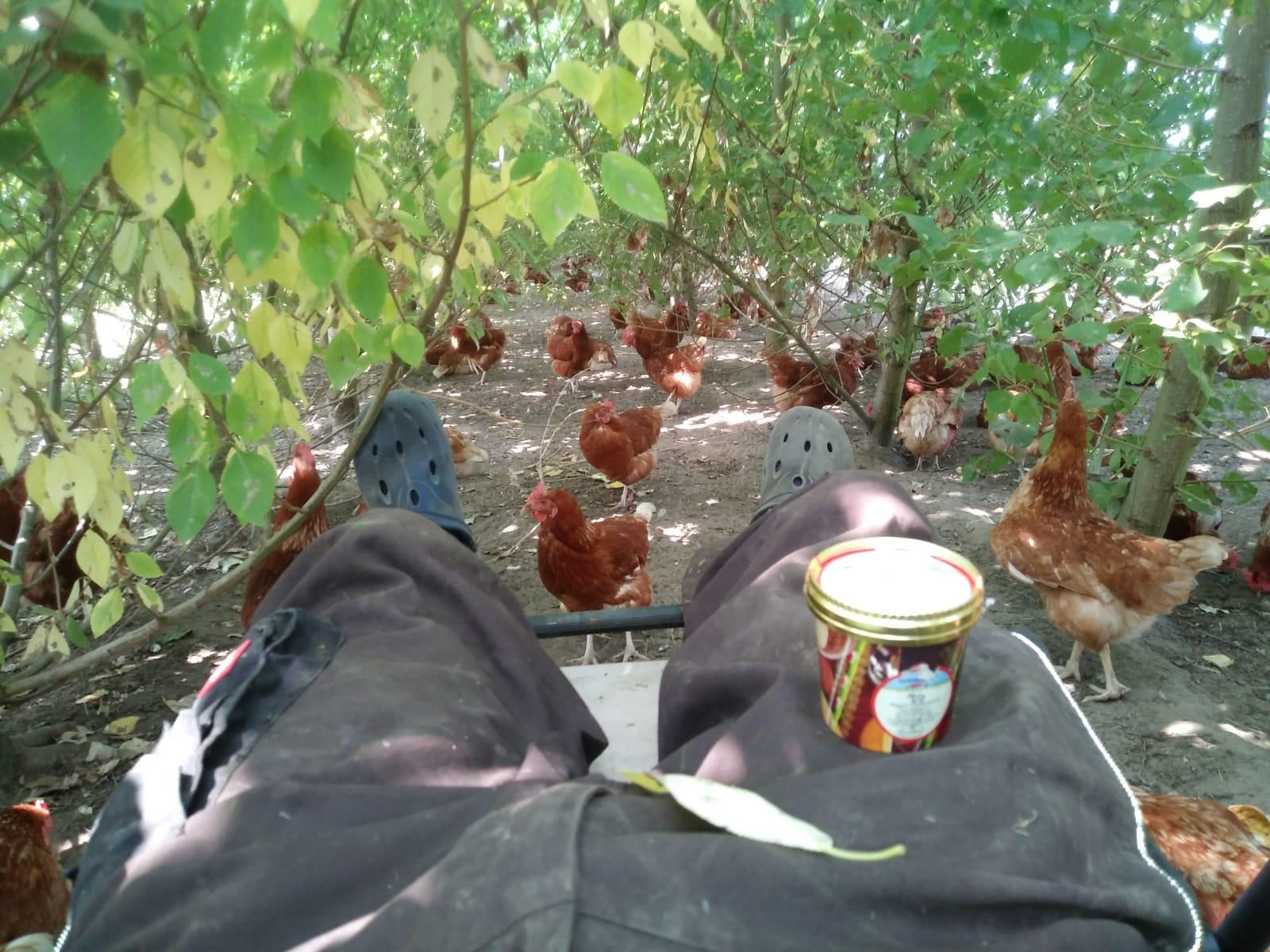Sommer im Hühnerwald: schattig und luftig!
