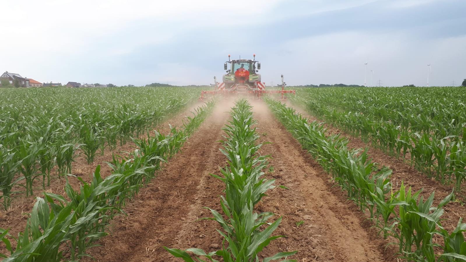 Mais als Teil unserer Fruchtfolge - ein Versuch