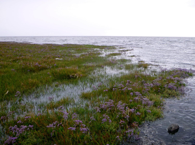 Salzwiesen bei Flut