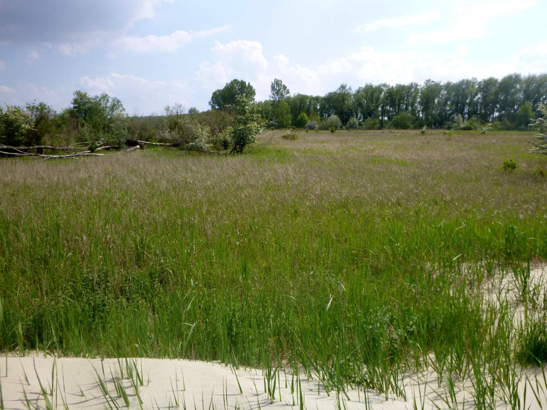 Schwarztonnensand: Wildnis mitten in Deutschland