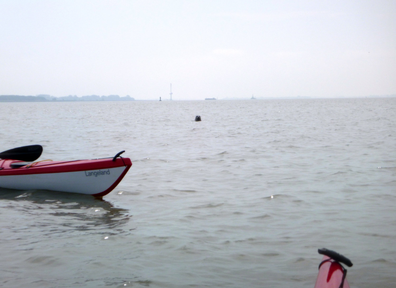 Seehund guckt Kajakfahrer