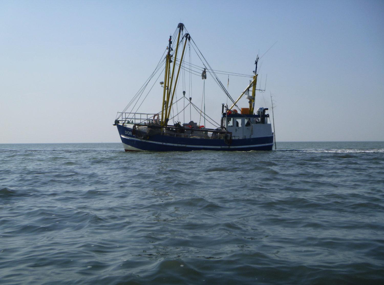 Krabbenkutter im Watt