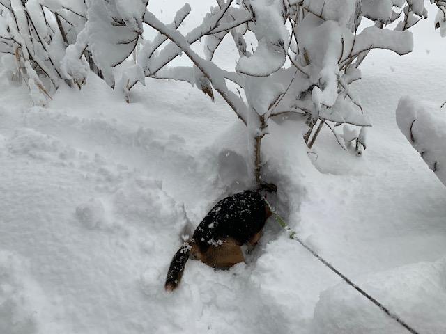新雪は大好きです